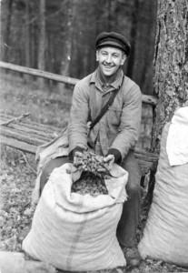 1945 | Die Tagesernte gesammelter Zapfen von Kiefern bringen die Zapfenpflücker zu den Forstverwaltungen, die dafür sorgen, dass der Samen aus den Zapfen entfernt wird und zur Aussaat kommt. Foto: Otto Donath Bundesarchiv, Bild 183-N0304-306 / CC-BY-SA Quelle: Wikimedia Commons