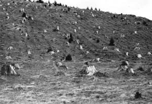 Um 1946 | Reparationshiebe räumten nach dem Zweiten Weltkrieg ganze Landstriche leer. Dieses aufgeräumte Waldstück zeigt tiefwurzelnde Baumstümpfe, welche die Hänge vor Erosion schützen sollen bis die Wurzeln von jungen Bäumen in größere Bodentiefen eingedrungen sind. Foto: Wille Bundesarchiv, Bild 183-12052-0008 / CC BY-SA Quelle: Wikimedia Commons