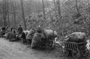 1946 | Selbstversorgung der Bevölkerung mit Brennstoffen. Frauen beladen Handwagen mit Brennholz. Foto: Richard Peter Deutsche Fotothek, Bild / CC BY-SA Quelle: Wikimedia Commons