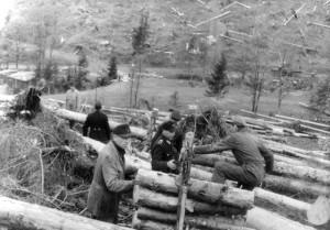 1948 | Bekämpfung des Borkenkäfers: Polizei und Feuerwehr beim Aufräumen und Abtransportieren des geschlagenen Holzes. Foto: Erich Dumm Bundesarchiv, Bild 183-2005-0706-516 / CC-BY-SA Quelle: Wikimedia Commons