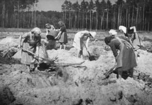 1950er | Kiefernzüchtung Für die Züchtung von Kiefern ist eine besondere Bodenvorbereitung notwendig. Um eine gute Durchmengung des Bodens zu gewährleisten, wird die zu kultivierende Fläche von Baumstümpfen befreit. Die dadurch entstehenden Löcher werden mit Roh-Humus aufgefüllt, wieder eingeebnet und bepflanzt. Foto: Klein Bundesarchiv, Bild 183-S91771 / CC-BY-SA Quelle: Wikimedia Commons