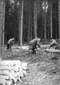 1955 | Gemeinschaftswald Schälen und Schneiden von Faserholz Foto: Wittig Bundesarchiv, Bild 183-30118-0002 / CC BY-SA Quelle: Wikimedia Commons