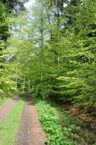 Das Gesetz vom 14. März 1881 über die gemeinschaftlichen Holzungen schränkt die Teilung der Genossenschaftswaldungen ein und regelt die staatliche Einwirkung auf die Bewirtschaftung. Foto: Burkhard Schäck