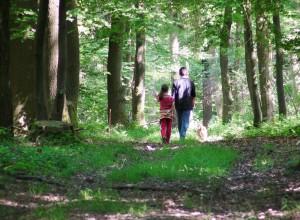 Wald Seelbach/Bettgenhausen Foto: Yvette Schäck
