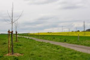 2016 | Erste Obstbaumplflanzung auf dem Herchenberg, Gemarkung Seelbach Foto: Yvette Schäck